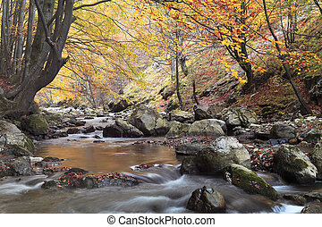 Beautiful autumn forest with a river in Ramet gorge, Transylvania, Romania.