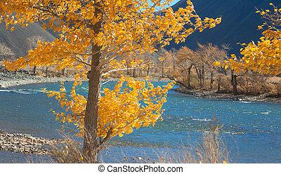 Autumn river in the Altai mountains