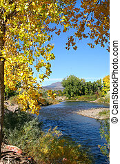 Autumn River View - Golden autumn leaves of the cottonwood (...