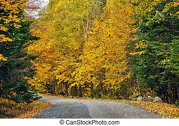Autumn road in Maine