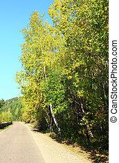 Autumn road in Siberia