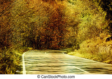 Autumn road in the forest