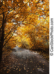 Autumn road in the park