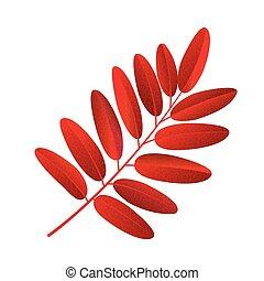 Autumn rowan leaf vector on a white background