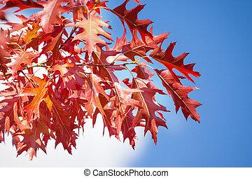 Autumn rowan red leaves over sun and sky