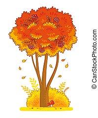 Autumn rowan tree on a white background.