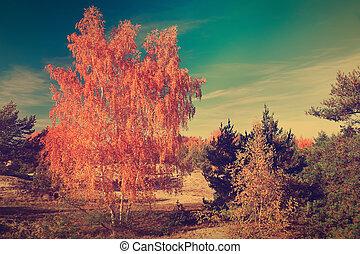 autumn., scène, automne