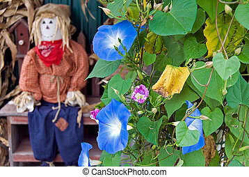 autumn scarecrow with morning glory