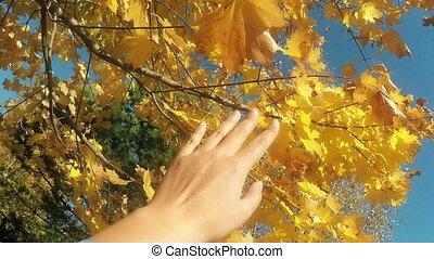 Autumn scene. Hand touching autumn leaves with sun beam over...
