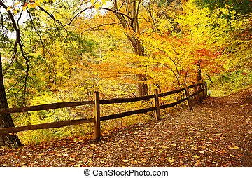 Autumn scene landscape at Letchworth State Park