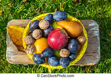 Autumn scene - Fall season scene with crop of fruits and...