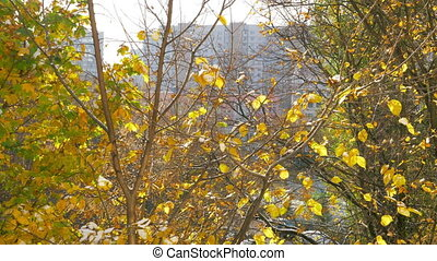 Autumn scene with dry leaves falling down from the tree -...