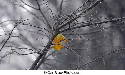 Autumn scene with lonely yellow leaf on the tree under snow...