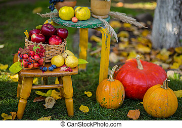 Autumn scene with plants, pumpkins, apples in a wicker basket, ceramic pots, wooden chair, vintage style, composition in the garden.