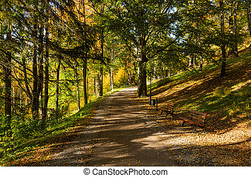 Autumn scene with road in forest with colorful foliage
