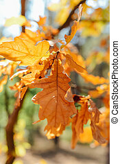 Autumn scene. Yellow maple leaf with water drops on a bed of bro