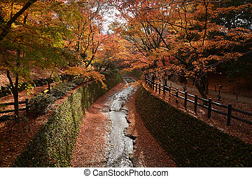 Autumn scenery. Beautiful red maple leaves fall in park.