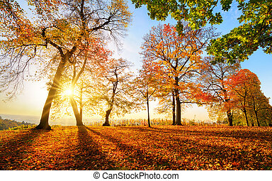 Autumn scenery before sunset in a park