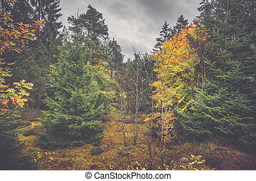Autumn scenery in a Scandinavian forest