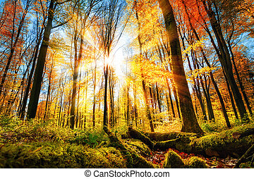 Autumn scenery in colorful sunny forest
