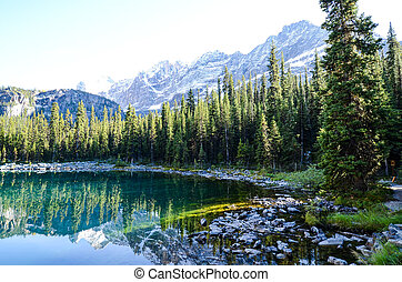 Autumn Scenery of Lake O'Hara, Yoho National Park, Canadian Rockies
