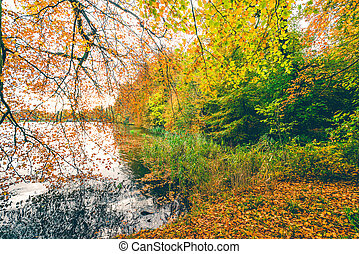 Autumn scenery with a large branch