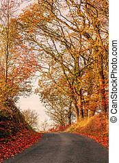 Autumn scenery with a road