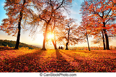 Autumn scenery with gold sunshine in a park