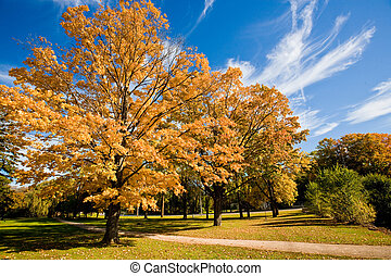 Autumn scenic of a path leading through some golden trees amidst a blue sky. Shot in Kitchener, Ontario, Canada.