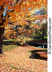 Yellow and brown leaves cover the ground in a park at the beginning of fall