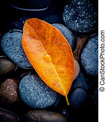 Autumn season and peaceful concepts. Orange leaves falling on river stone . Abstract background of autumn leaves on black stone with water drop.