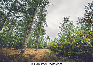 Autumn season in a Scandinavian forest