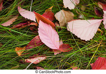 Autumn season leaves on green grass in the bright sunlight park with raindrops background. Selective focus used.
