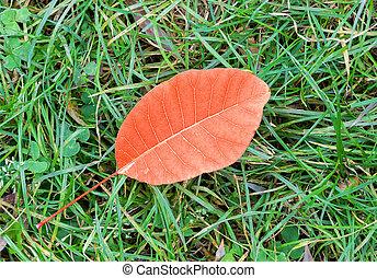 Orange autumn leaf on green grass