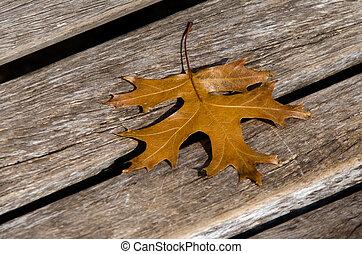 Autumn Season - An oak tree leaf on a street bench during...