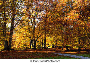 autumn season scenic in a park