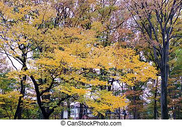 Autumn season with Colorful maple leaf