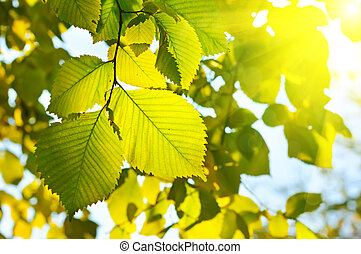 Autumn seasonal wallpaper with yellow vivid leaves and...
