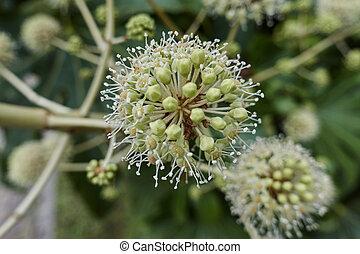 autumn seed on the tree