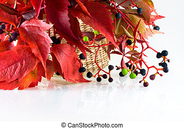 autumn bunch of leaves