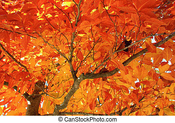 Autumn shade - Shade under a tree with glowing orange leaves...