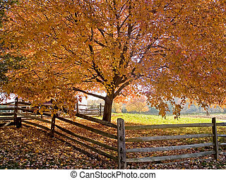 Autumn Shade - A beautiful shade tree and fence at the peak...