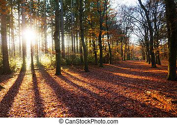 Autumn shadow lane