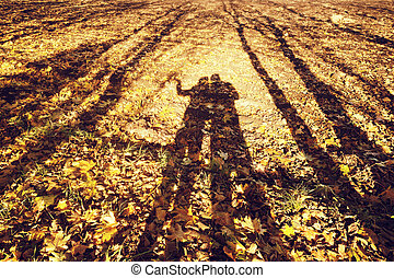 autumn shadows landscape