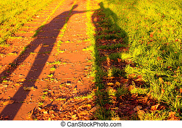 Autumn shadows on grass
