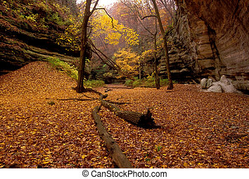 autumn silence - Starved Rock State Park, IL