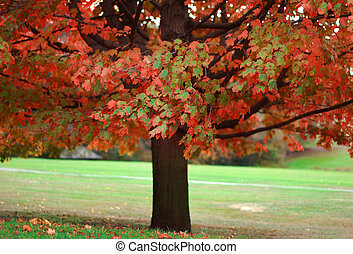 Autumn - single colorful autumn tree in park