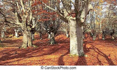 Autumn slow motion