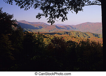 Autumn, Smokies - Autumn Foliage, Great Smoky Mtns NP, TN