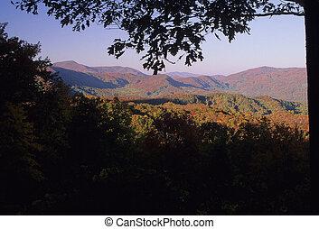 Autumn, Smokies - Autumn Foliage, Great Smoky Mtns NP, TN